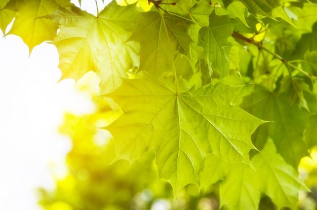Groene bladeren op bosachtergrond in zonnige dag