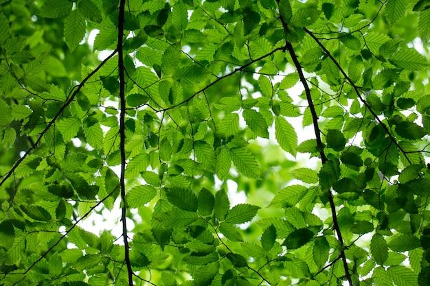 Groene bladeren op de groene boom
