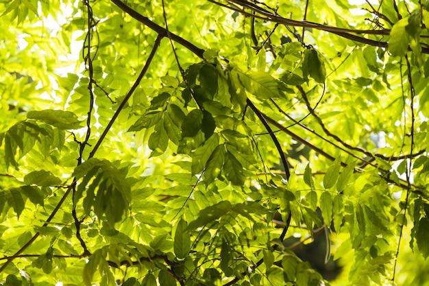 Groene bladeren op de tak van een boom