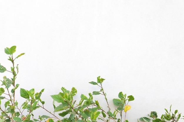 Groene bladeren op een wit geïsoleerd oppervlak