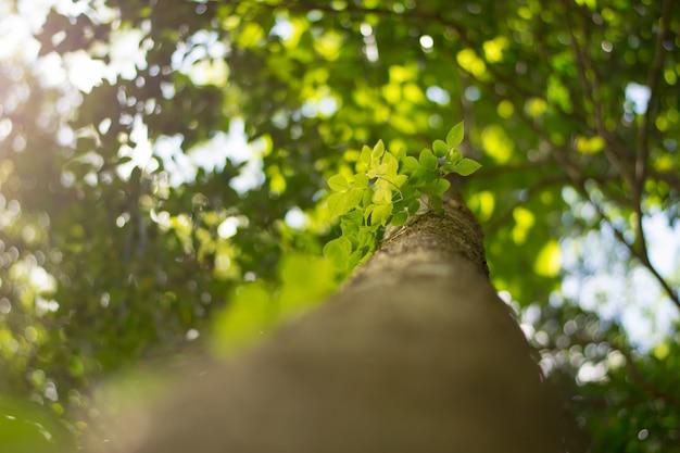 Groene bladeren op groene boomachtergrond