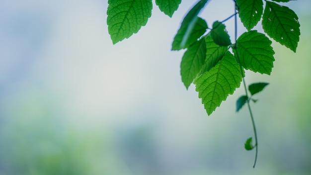 Groene bladeren op tak