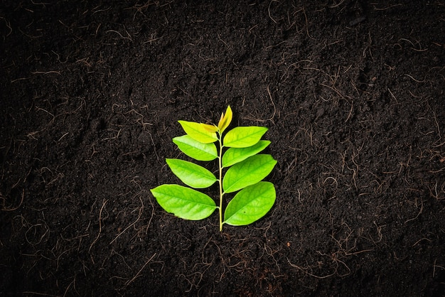 Groene bladeren op verse zwarte aarde met mulch voor tuinieren