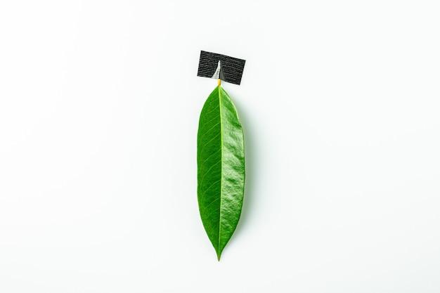 Groene bladeren op wit bureau.