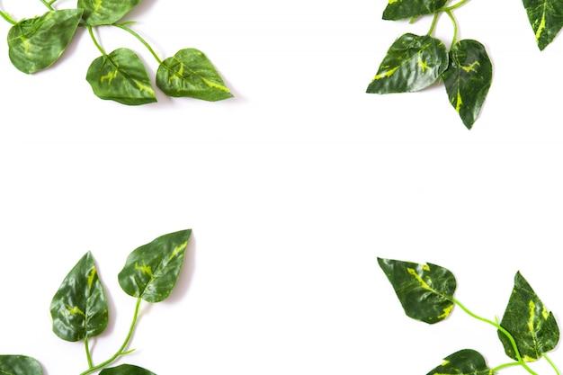 Groene bladeren op wit oppervlak bovenaanzicht tropisch concept
