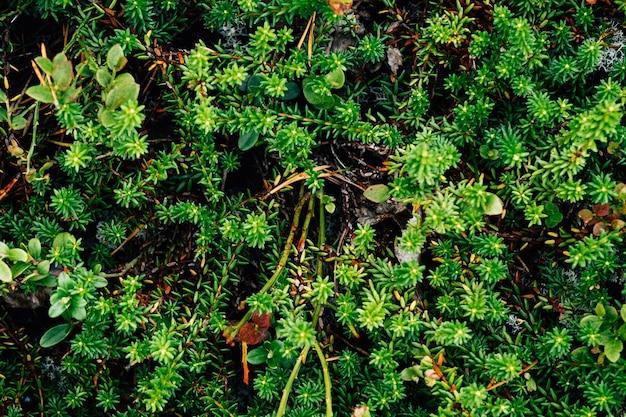Groene bladeren patroon achtergrond. natuurlijke organische bosachtergrond