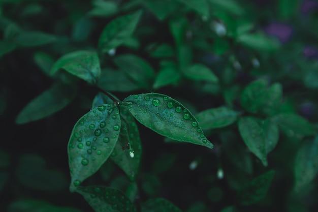 Groene bladeren patroon achtergrond. plat leggen. natuur donkergroene toon achtergrond