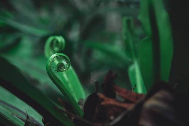 Groene bladeren patroon achtergrond