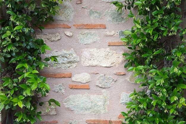 Groene bladeren planten over bakstenen muur achtergrond