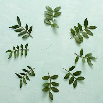 Groene bladeren takje gerangschikt in cirkelvormig frame op pastel groen oppervlak