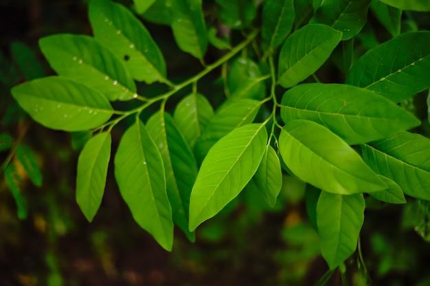 Groene bladeren textuur achtergrond, natuurlijke achtergrond en behang