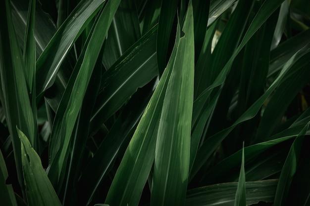 Groene bladeren textuur achtergrond. volledig frame van tropische donkergroene bladtoon.