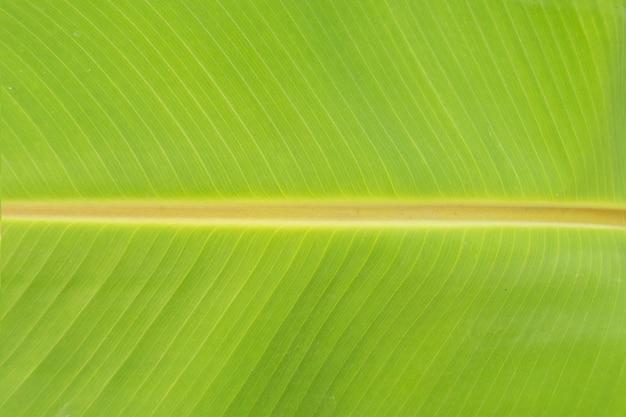 Groene bladeren textuur close-up