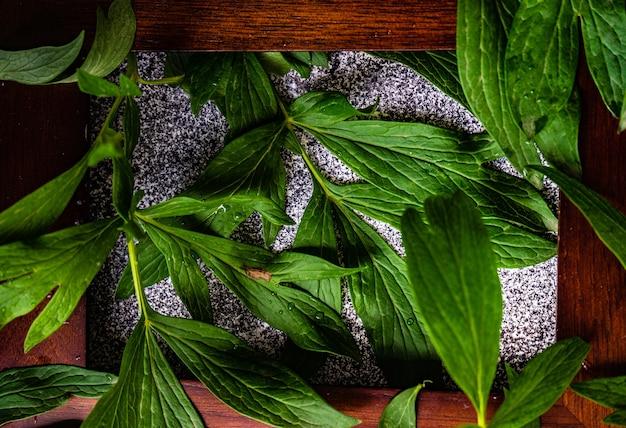Groene bladeren van de plant van de pioenbloem