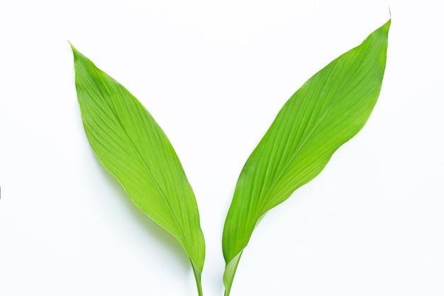 Groene bladeren van kurkuma op wit.