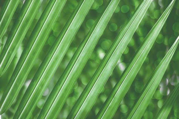 Groene bladeren van palmbomen, lichtgroen tropisch jungle palm gebladerte