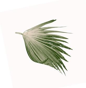 Groene bladeren van palmboom die op witte achtergrond wordt geïsoleerd