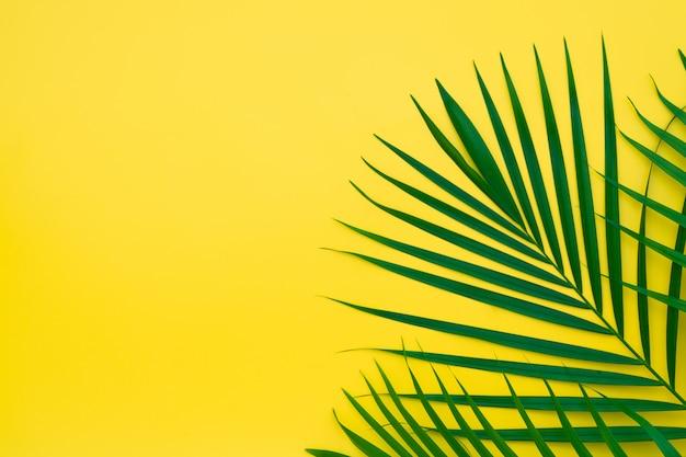 Groene bladeren van palmboom op gele achtergrond.