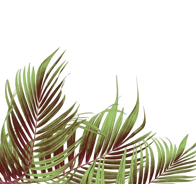 Groene bladeren van palmboom op witte achtergrond