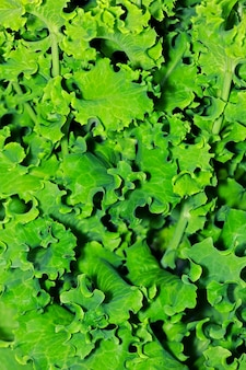 Groene bladeren van plantaardige salade close-up weergave. gestructureerde achtergrond van verse bladeren groene salade