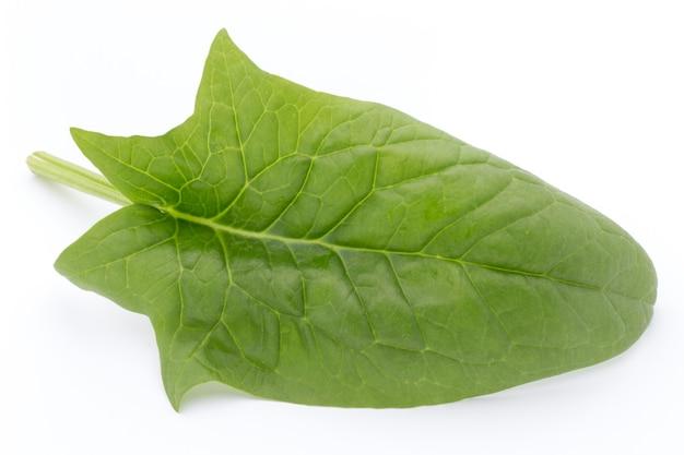 Groene bladeren van spinazie geïsoleerd op wit