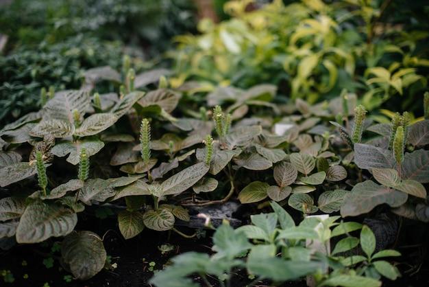 Groene bladeren van tropische planten close-up. woud. vegetatie.