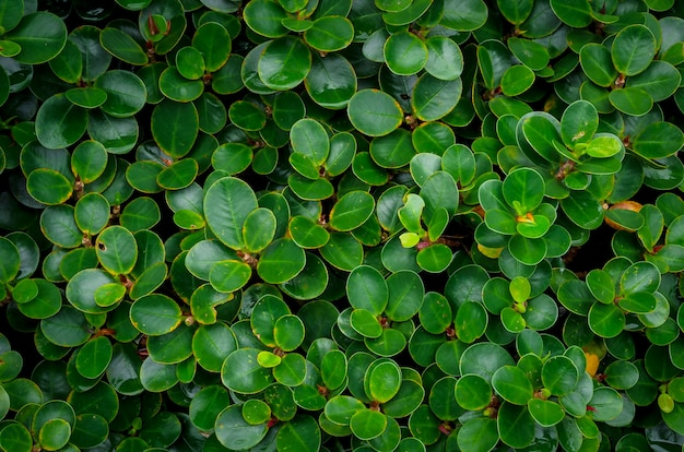 Groene bladeren van tropische planten