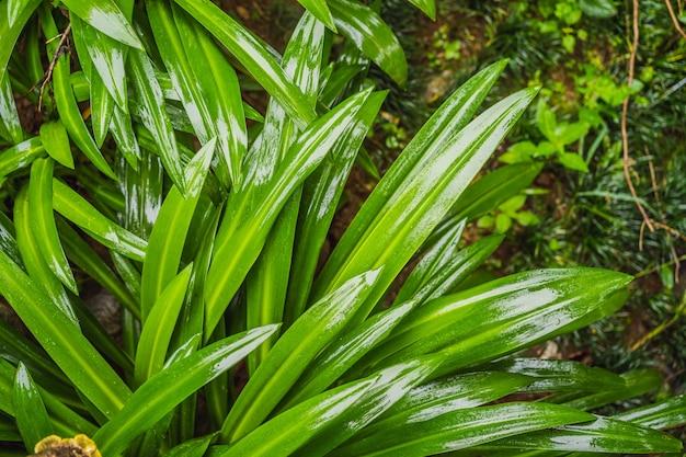Groene bladeren voor achtergrond en behang