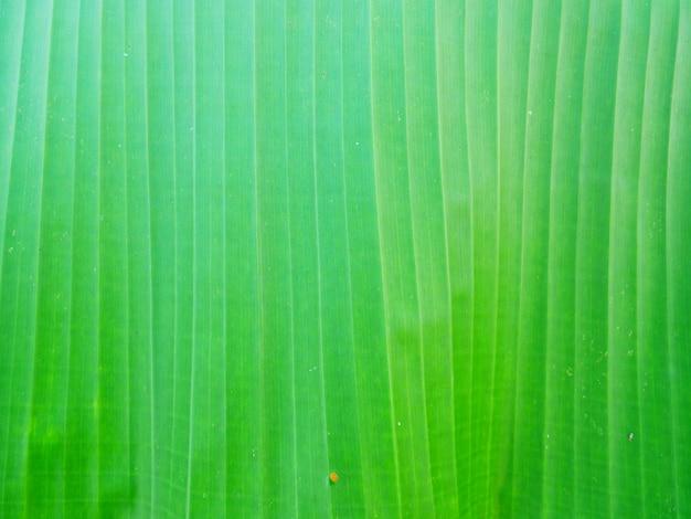 Groene bladerenachtergrond, aardinstallatie
