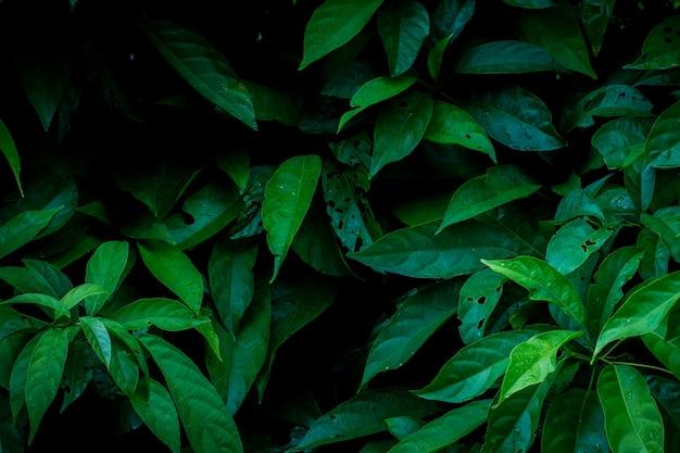 Groene bladerenachtergrond in de donkere lichte illustratie van het ecoconcept of de achtergrond van het verfrissingconcept
