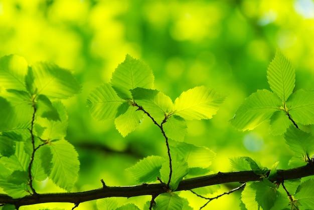 Groene bladerenachtergrond in zonnige dag