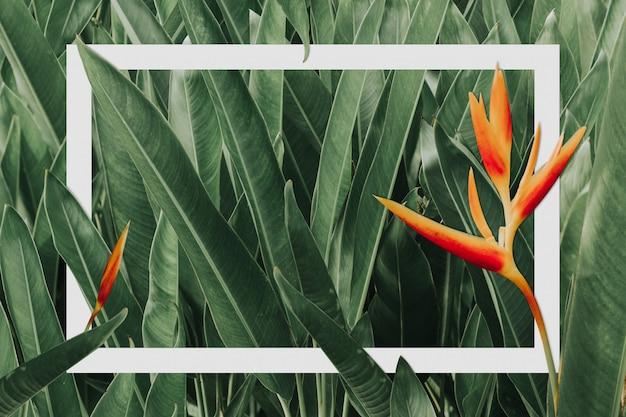 Groene bladerenachtergrond met witboekkader. natuur concept