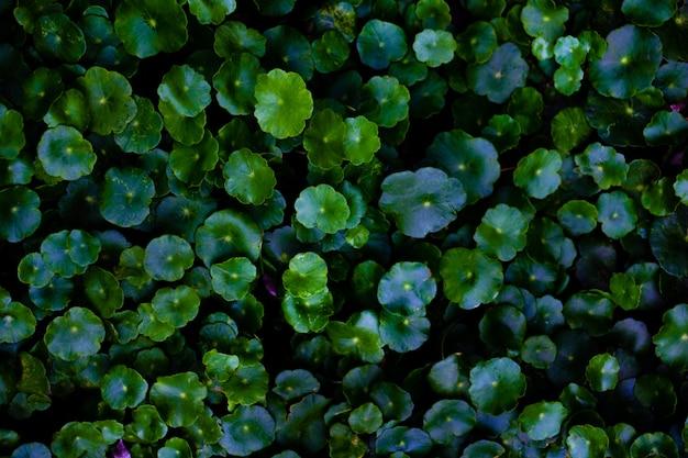 Groene bladerenachtergrond