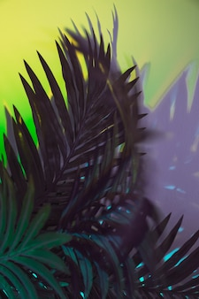 Groene bladereninstallatie op gekleurde achtergrond