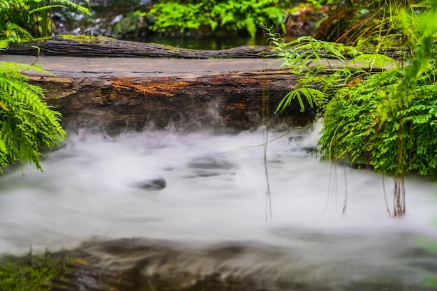 Groene bladinstallatie en logboekbrug op de waterdaling van de tuin