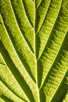 Groene bladmacro met diepe schaduwen uit viens