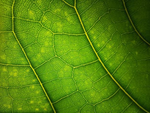 Groene bladmacro
