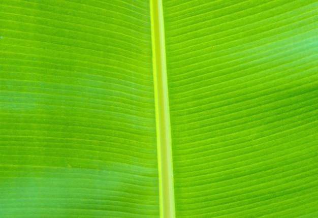 Groene bladtextuur van een plant
