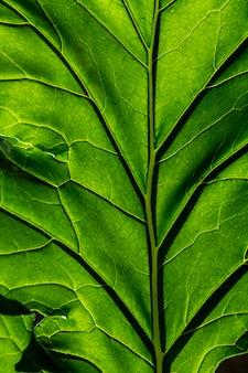 Groene bladtextuur