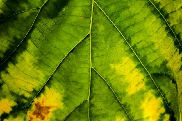 Groene bladwinding aan de gele achtergrond van het textuur macroclose-up