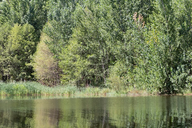 Groene bomen aan de rand van het water