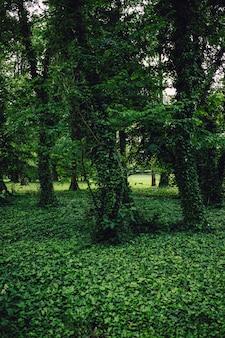 Groene bomen bedekt met levendige groene planten