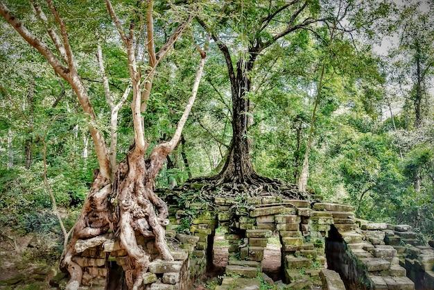 Groene bomen en de ruïnes van het historische oriëntatiepunt van angkor thom in kambodja