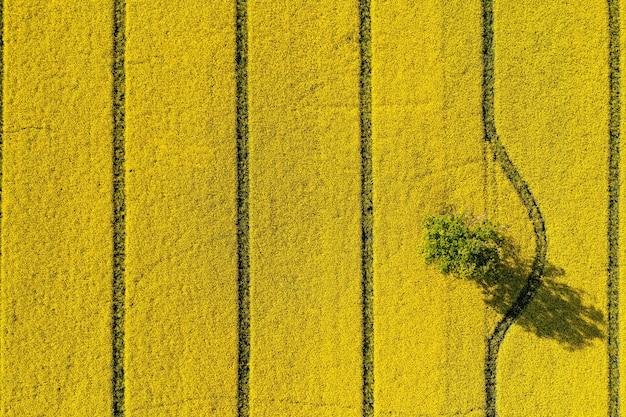 Groene bomen in het midden van een groot bloeiend geel repe-veld, van bovenaf gezien