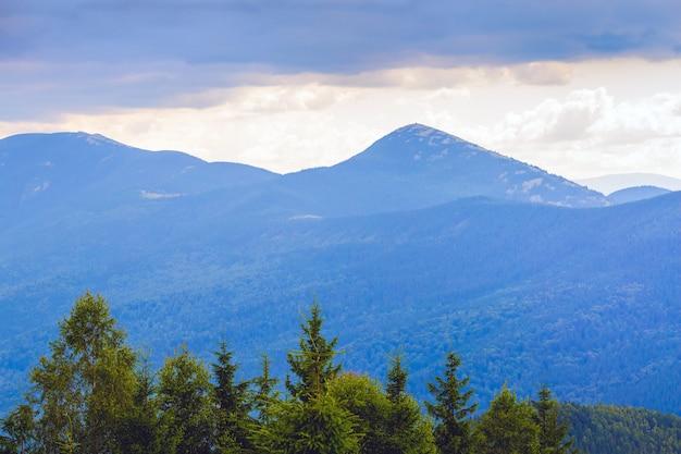Groene bomen met hoge blauwe bergen tijdens zonsondergang