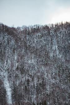 Groene bomen op besneeuwde veld