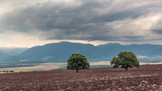 Groene bomen op een geploegd boerenveld