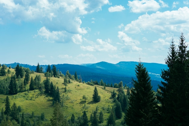 Groene bomen over de berg