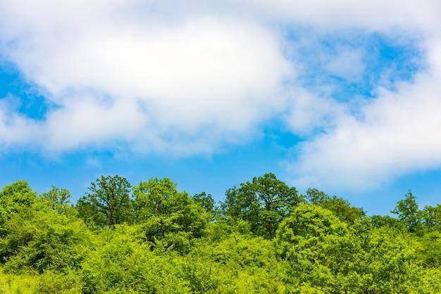 Groene bomen tegen de blauwe lucht