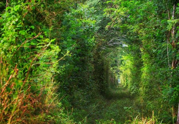 Groene bomen tunnel.